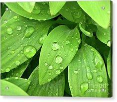 Drops On Leaves Acrylic Print