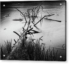 Acrylic Print featuring the photograph Drowning by Alan Raasch