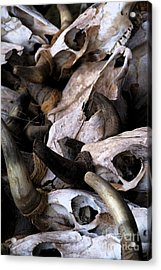 Dry As Bones Acrylic Print by Linda Shafer