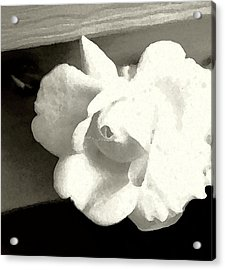 Dry Brushed Rose Acrylic Print by Emily Kelley