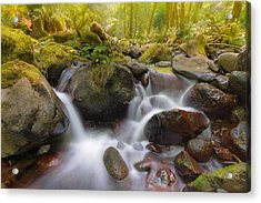 Dry Creek II Acrylic Print by David Gn