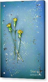 Acrylic Print featuring the photograph Dry Flowers On Blue by Jill Battaglia