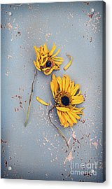 Acrylic Print featuring the photograph Dry Sunflowers On Blue by Jill Battaglia