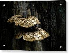 Dryads Saddle Fungi Acrylic Print