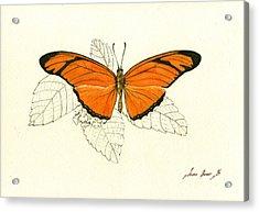 Dryas Iulia, Orange Julia Butterfly Acrylic Print