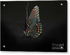 Drying Wings Acrylic Print by Judy Hall-Folde