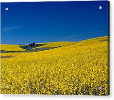 Dt816palouse Acrylic Print by Leland D Howard