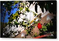 Dubrovniks Butterfly Acrylic Print