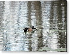 Acrylic Print featuring the photograph Duck Alone by Teresa Blanton