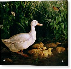 Duck And Ducklings Acrylic Print by English School
