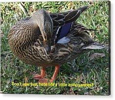 Duck Annoyances Acrylic Print by Rana Adamchick