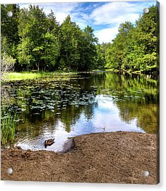 Acrylic Print featuring the photograph Duck At Covewood by David Patterson