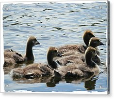 Duck Babies On The Water Acrylic Print