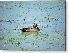 Acrylic Print featuring the photograph Duck Bluegreen by Teresa Blanton