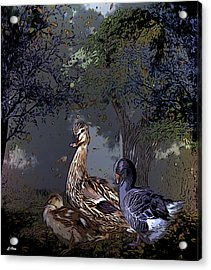 Duck Duck Goose 002 Acrylic Print by G Berry