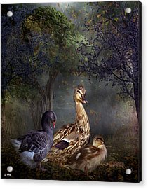 Duck Duck Goose Acrylic Print by G Berry