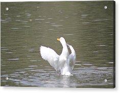 Duck Flight Acrylic Print