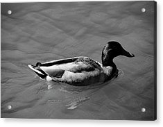 Acrylic Print featuring the photograph Duck In Black And White by Mike Murdock