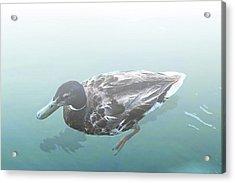Acrylic Print featuring the digital art Duck In The Mist by Ellen Barron O'Reilly