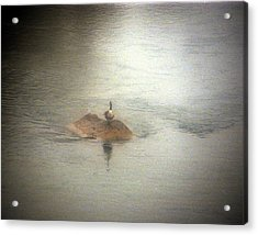Duck Island Acrylic Print