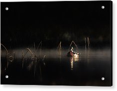 Acrylic Print featuring the photograph Duck Of The Morning Mist by Bill Wakeley