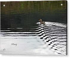 Duck On Ripple Wake Acrylic Print