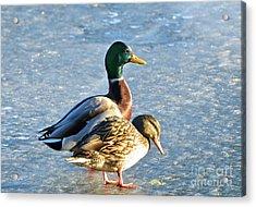 Duck Pair On Frozen Lake Acrylic Print