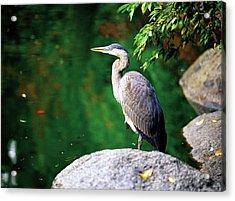 Duck Pond Heron Acrylic Print by Jim Nelson