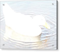 Acrylic Print featuring the photograph Duck Relaxing by Robin Coaker
