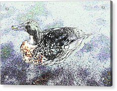 Acrylic Print featuring the photograph Duck With Fine Plumage by Nareeta Martin