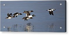 Duckin Out Acrylic Print by Randy Hall