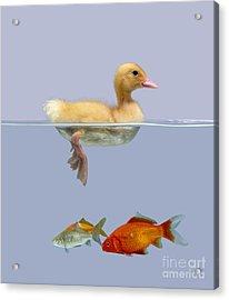 Duckling And Goldfish Acrylic Print by Jane Burton