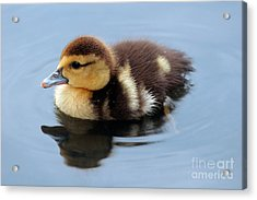 Duckling Acrylic Print by Jeannie Burleson