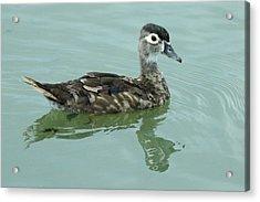 Duckling Acrylic Print by Teresa Blanton