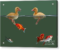 Ducklings And Goldfish Acrylic Print by Jane Burton