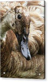 Ducks Head Acrylic Print