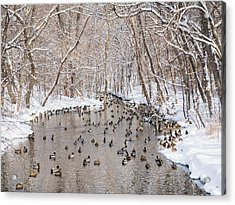 Acrylic Print featuring the photograph Ducks In A Creek by Whitney Leigh Carlson
