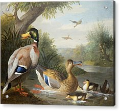 Ducks In A River Landscape Acrylic Print by Jakob Bogdany