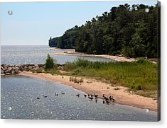 Acrylic Print featuring the photograph Ducks In A Row by Joanne Coyle