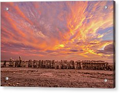 Acrylic Print featuring the photograph Ducks In A  Row by Peter Tellone