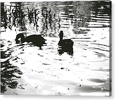 Ducks In Piedmont Park Acrylic Print by Utopia Concepts