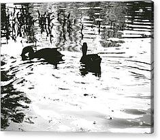 Ducks In Piedmont Park Acrylic Print