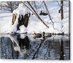 Acrylic Print featuring the photograph Ducks In Snow by Whitney Leigh Carlson