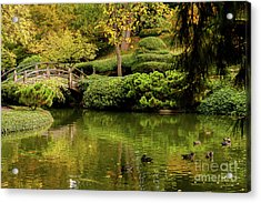 Acrylic Print featuring the photograph Ducks In Summertime by Iris Greenwell