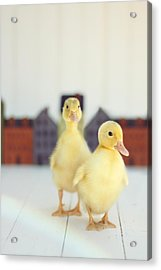 Ducks In The Neighborhood Acrylic Print by Amy Tyler