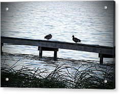 Ducks On A Dock Acrylic Print by Evelyn Patrick