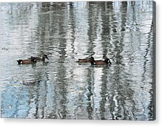 Acrylic Print featuring the photograph Ducks Painted By God by Teresa Blanton