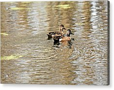 Acrylic Print featuring the photograph Ducks Together by Teresa Blanton