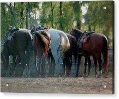 Dude Ranch Acrylic Print by JAMART Photography