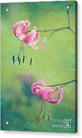 Duet - V01a Acrylic Print by Variance Collections